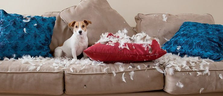 Pies demoluje dom, co zrobić?