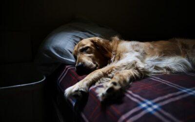 Jak oduczyć psa spania w naszym łóżku?