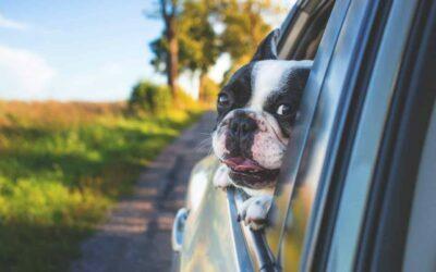 Podróż z psem – co warto wiedzieć?