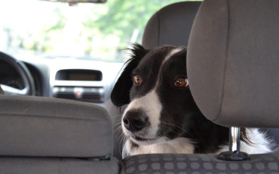 Jak przygotować się do podróży z psem?