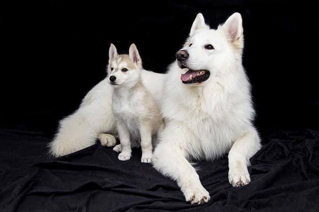 Kiedy pies przestaje być szczeniakiem?