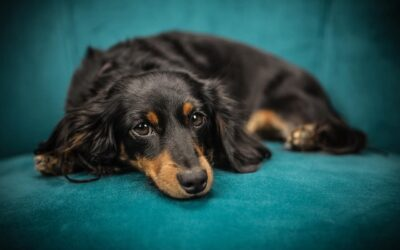 Jak opanować emocje u psa?