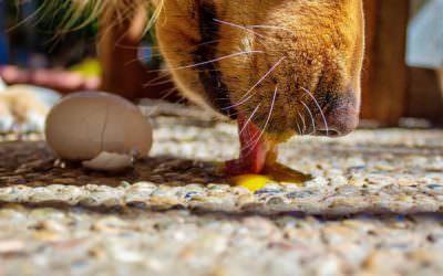 Jajo wdiecie psa, fakty imity
