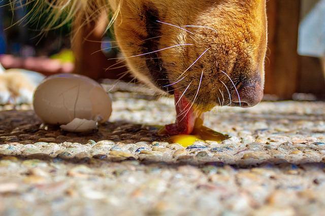 Jajo w diecie psa, fakty i mity