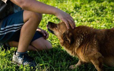 Jak rozpoznać padaczkę u psów?