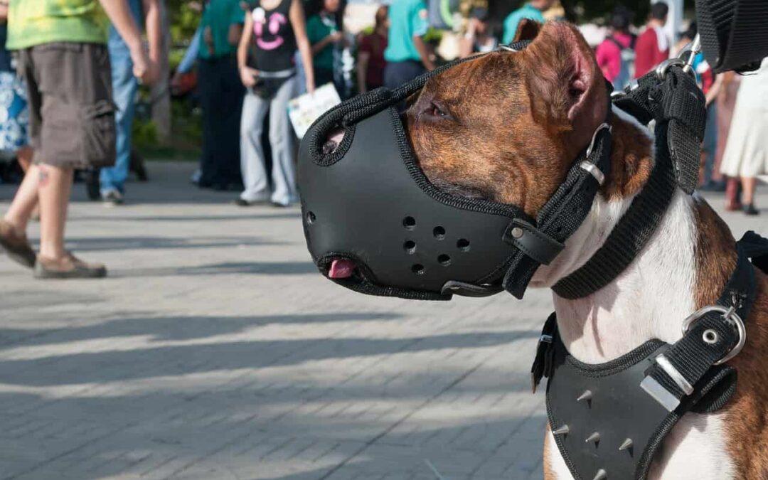 Czy każdy pies na spacerze powinien mieć kaganiec?