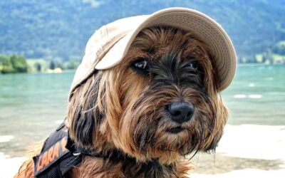Wakacje z psem za granicą