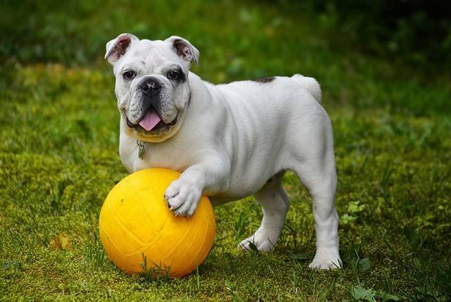 10 rzeczy, które musi mieć Twój pies