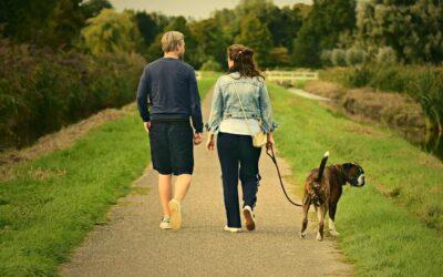 O czym należy pamiętać odwiedzając znajomych razem z psem?
