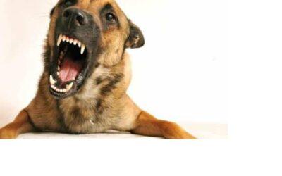 Przyczyny i sposoby zapobiegania agresji u psów
