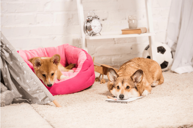 Naturalne gryzaki dla psa – sposób na zdrowe zęby i spokojny umysł pupila