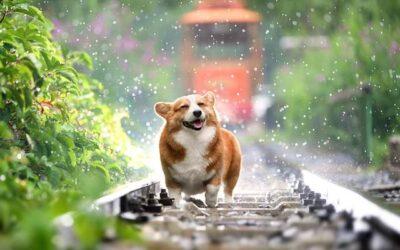Twój pies kaszle i kicha w upały?