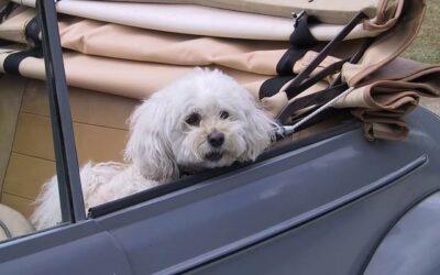 Jak przyzwyczaić psa do podróży samochodem?