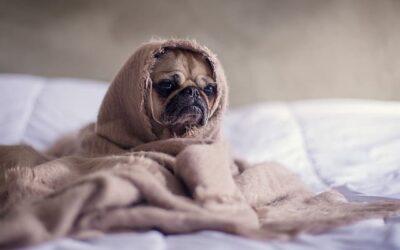 Jak nauczyć psa samodzielności