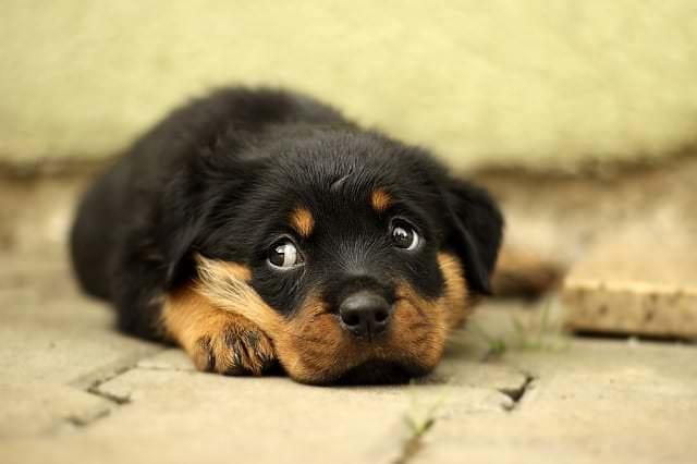 Jak pomóc psu przetrwać sylwestra? 10 sprawdzonych sposobów