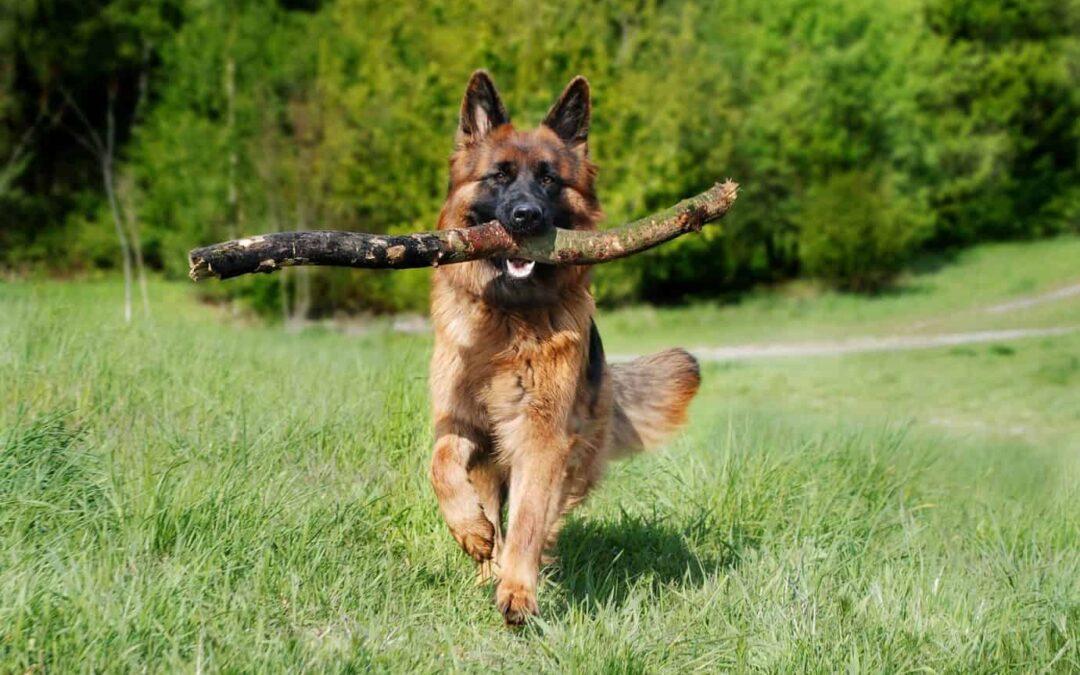Dlaczego ważna jest zabawa z psem?