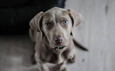 Pies w klatce – jak odpowiednio go do niej przyzwyczaić?