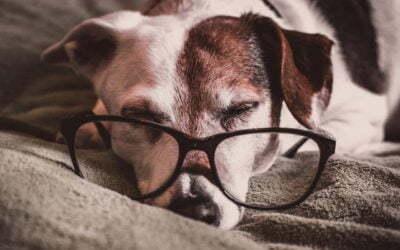 Książki o psach, które musisz przeczytać