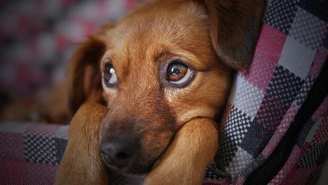 Wypadanie sierści u psa. Kiedy należy udać się do weterynarza?