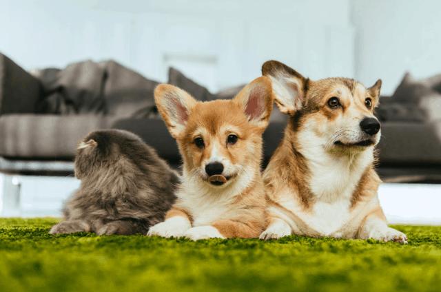 Zooterapia – jak leczą zwierzęta?
